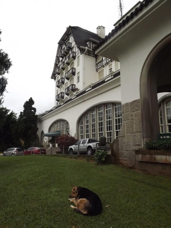 Cachorrinha deitada no gramado do Palácio Quitandinha