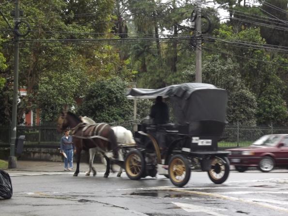 Animal explorado em charrete passa em frente a casa da Princesa Isabel