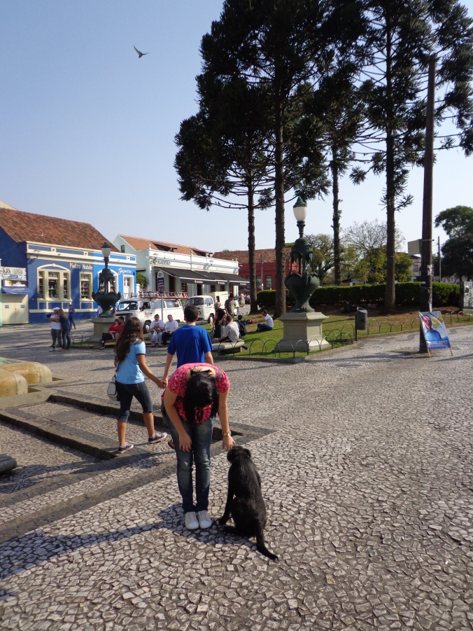 Animais e Araucárias no Praça Garibaldi, Setor Histórico