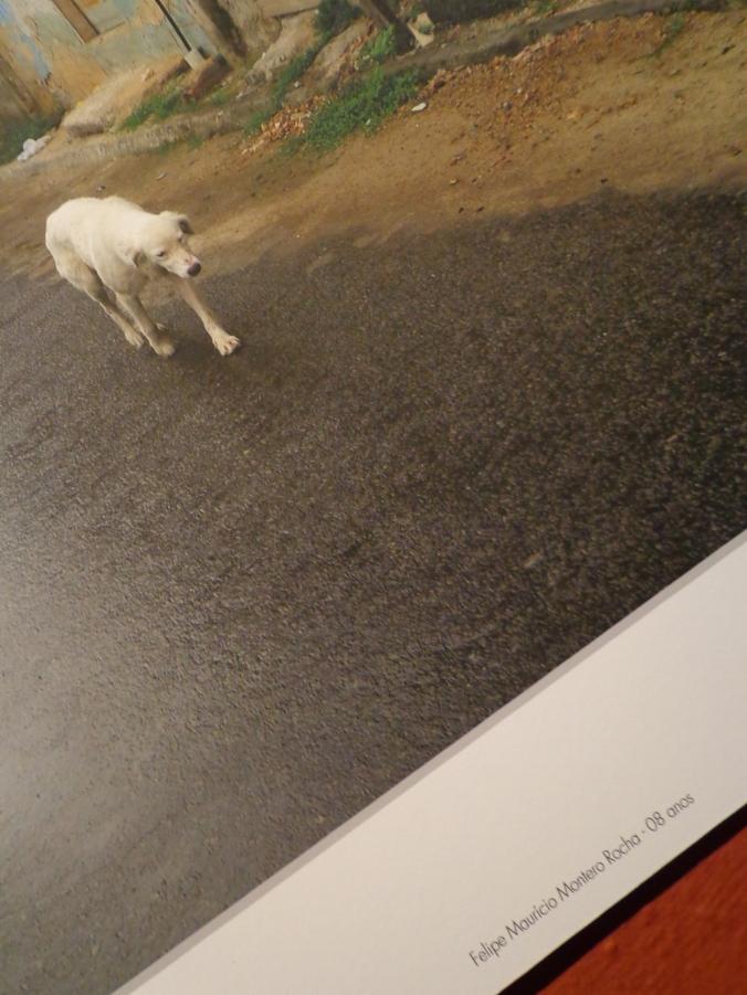 Felipe, de 8 anos, fotografa cão andando nas ruas de Paraty