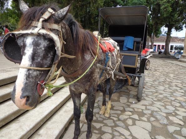 Cavalos escravizado em charrete de Paraty