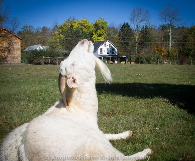 Joy tomando banho de sol.