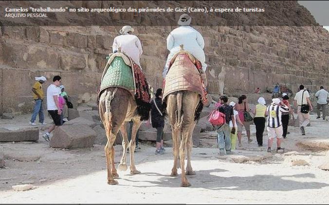 camelos turismo gizé egito
