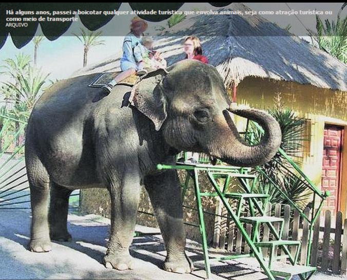 elefante explorado para turismo