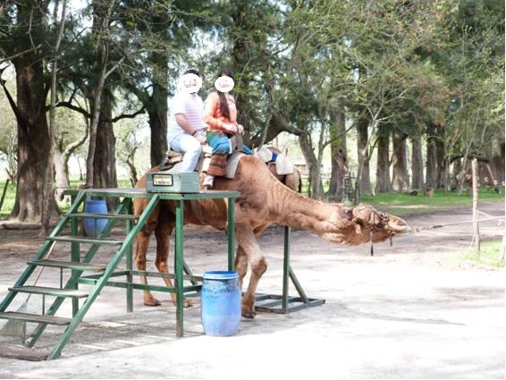 guia-de-viagem-zoologico-de-lujan-argentina-283519-7
