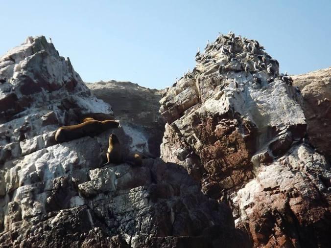 leões marinhos islas ballestras