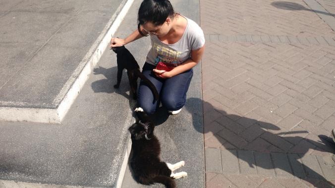 gatos lima (3)
