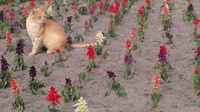 gato lime parque kennedy