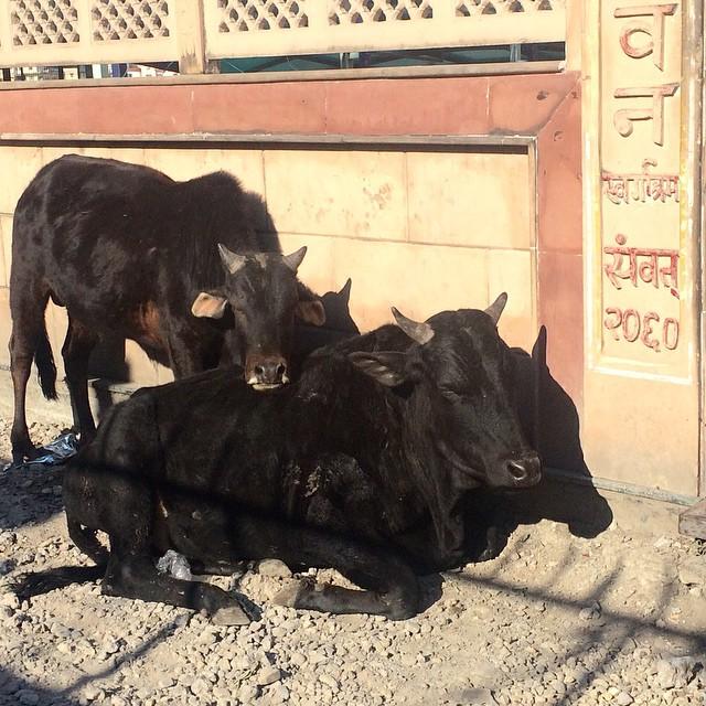 vacass
