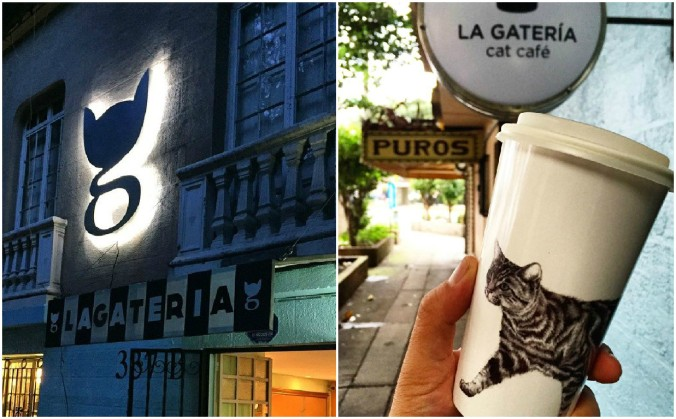 la gateria cat cafe méxico vegetariano